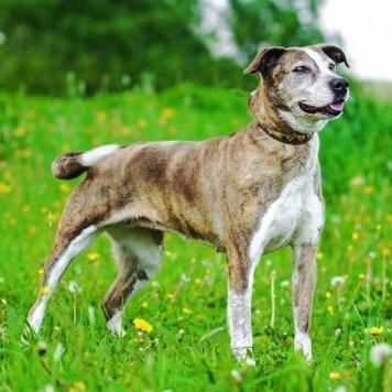 Элора - Собаки в добрые руки
