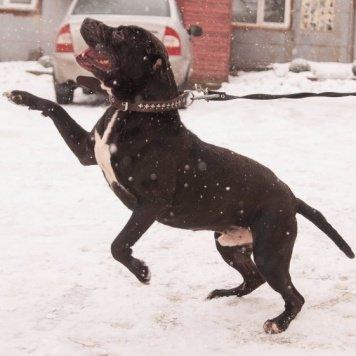Чемпион - Собаки в добрые руки