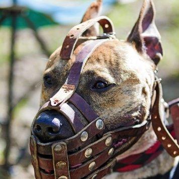 Кливер - Собаки в добрые руки