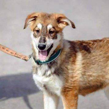 Сима и Сандра - Собаки в добрые руки