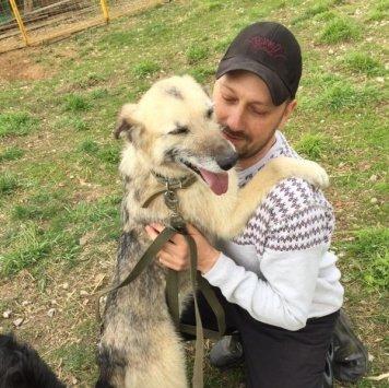 Фикус - Собаки в добрые руки