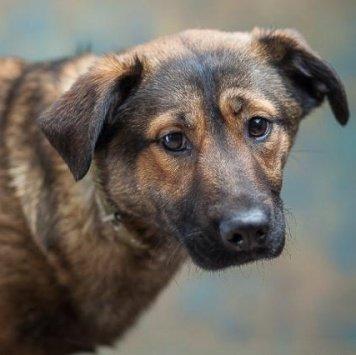 Верта - Собаки в добрые руки
