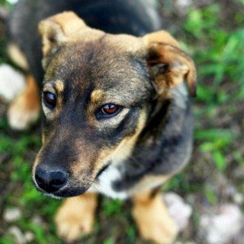 Жуленька - Собаки в добрые руки