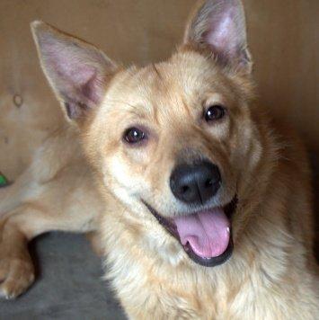 Лисичка Петра - Собаки в добрые руки