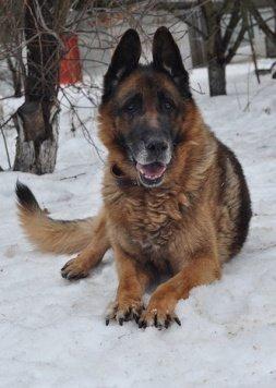 Жан Рено - Собаки в добрые руки