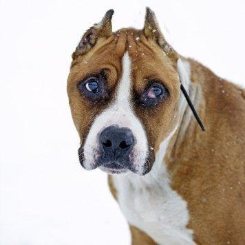 Кутюр - Собаки в добрые руки