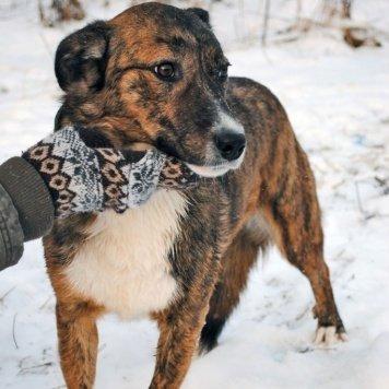 Сойка - Собаки в добрые руки