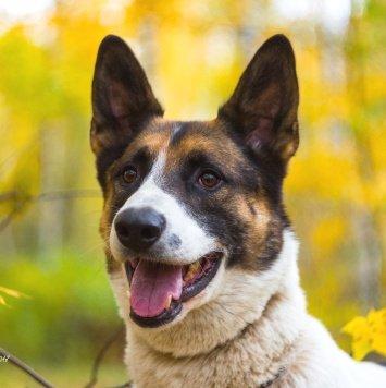 Алька - Собаки в добрые руки