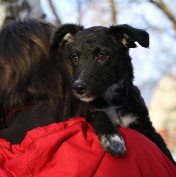 Аккорд - Собаки в добрые руки