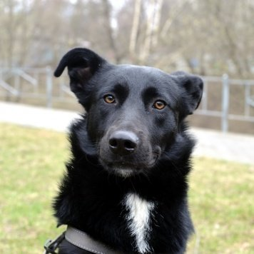 чёрный - Найденные собаки