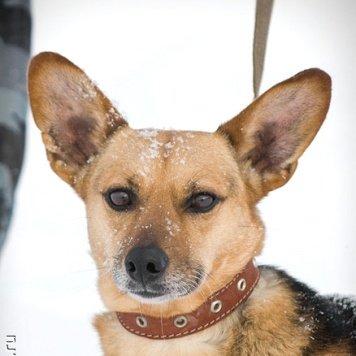 Алёнка - Собаки в добрые руки