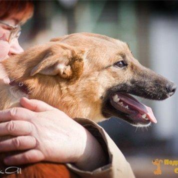 Герми - Собаки в добрые руки