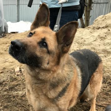 Гербера - Собаки в добрые руки