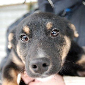 Капелька - Собаки в добрые руки