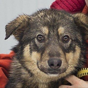 Плюша - Собаки в добрые руки