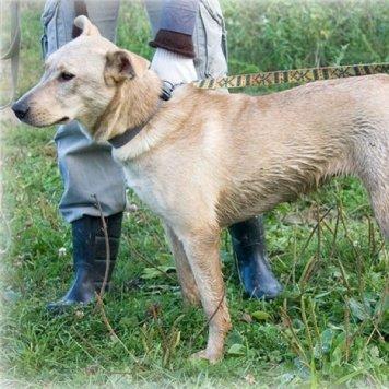 Агатка - Собаки в добрые руки