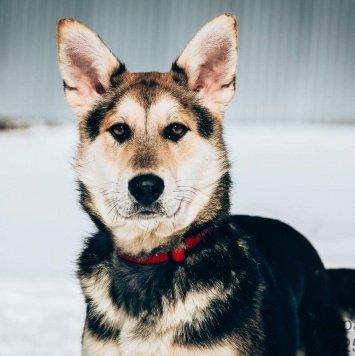 Бежо - Собаки в добрые руки