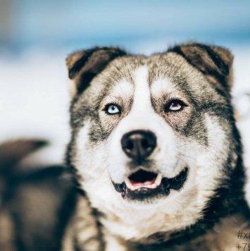 Скай - Собаки в добрые руки