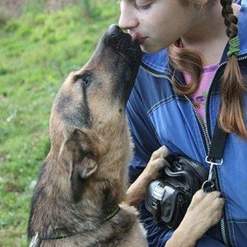 Гека - Собаки в добрые руки