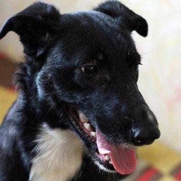 Роми - Собаки в добрые руки