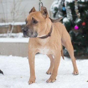 Герон - Собаки в добрые руки