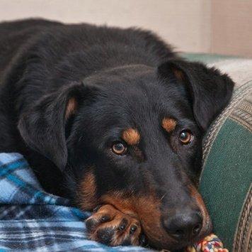 Валет - Собаки в добрые руки
