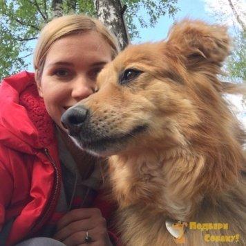 Спичка - Собаки в добрые руки