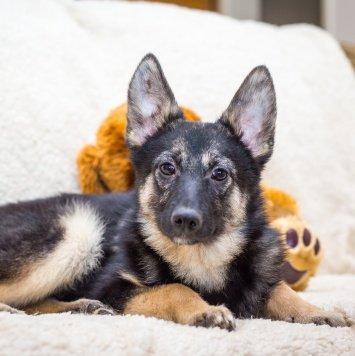 Кроша - Собаки в добрые руки
