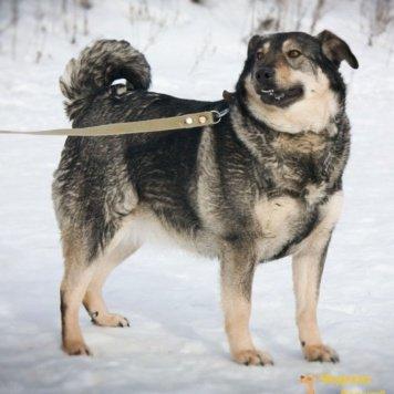 Дуся - Собаки в добрые руки