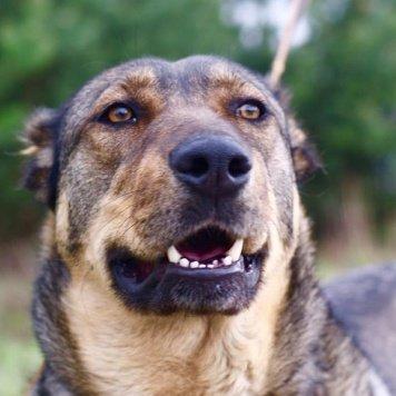 Ирма - Собаки в добрые руки