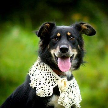 Кармен - Собаки в добрые руки