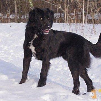 Антон - Собаки в добрые руки