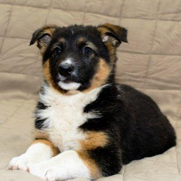 Зорька - Собаки в добрые руки