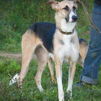 Зайка - Собаки в добрые руки