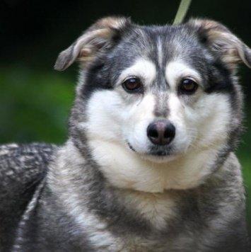 Бирюлька - Собаки в добрые руки