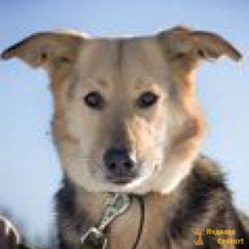 Красотка - Собаки в добрые руки