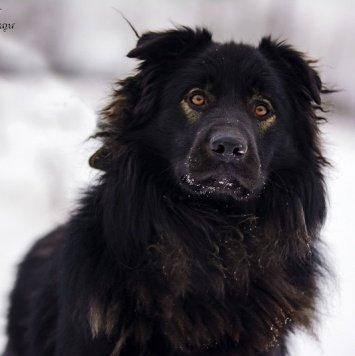 Ридик - Собаки в добрые руки