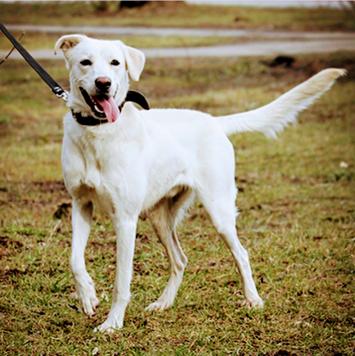 Винсент - Собаки в добрые руки