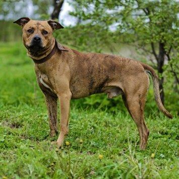 Сабур - Собаки в добрые руки