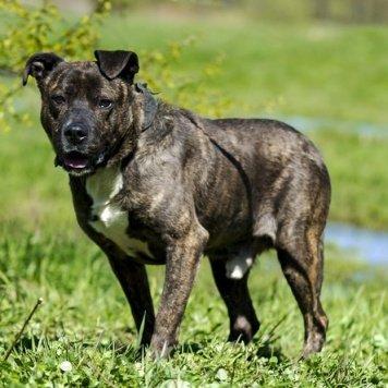 Эдик - Собаки в добрые руки