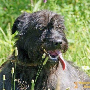 Борода - Собаки в добрые руки