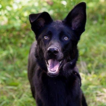 Коди - Собаки в добрые руки