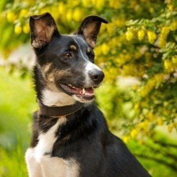 Нора - Собаки в добрые руки