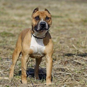 Фреш - Собаки в добрые руки