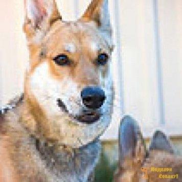 Лора-3 - Собаки в добрые руки
