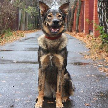 Виллс - Собаки в добрые руки