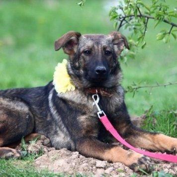 Глория - Собаки в добрые руки