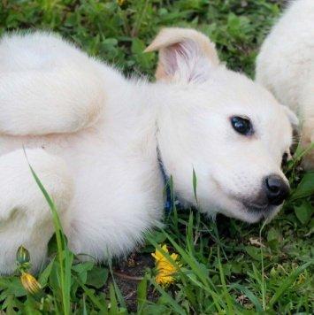 Щенки-симпатяги - Собаки в добрые руки