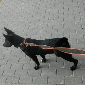 Джинни - Собаки в добрые руки