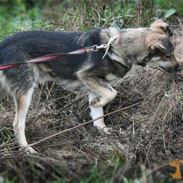 Гарсон - Собаки в добрые руки